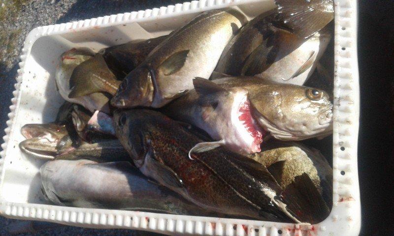 Fischkiste ist voll!